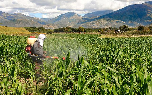 Todo trabajador dominicano esta amparado por el CÓDIGO DE TRABAJO